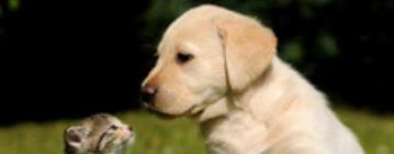 ペット相談可 物件特集 ペットと暮らせる賃貸物件が見つかる!