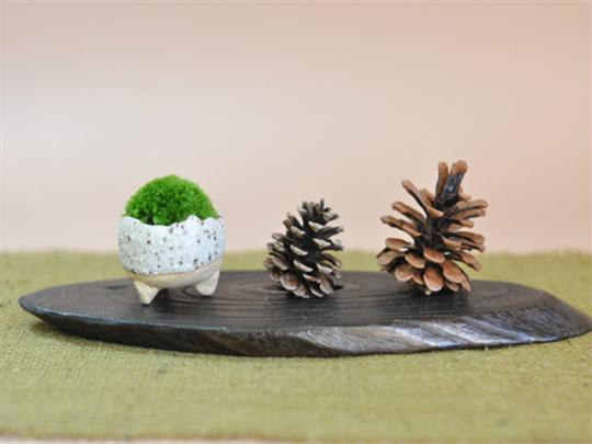 ミニゴケのように、常時室内管理でOKなものもある(画像提供:ミニ盆栽専門店「盆栽妙」)