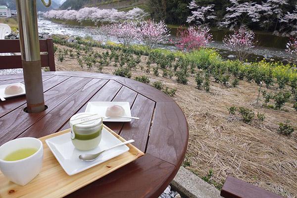 高知県には海のイメージしかないだろうか? 実は山林が84%を占める、天然の癒しスポットでもあるのだ