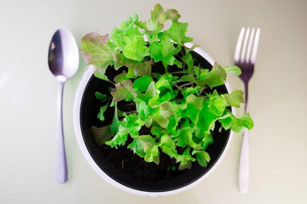 4月末くらいから育てはじめるものが多いようだが、今回は通年育てられる野菜を教えてもらった