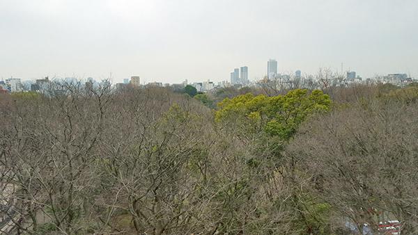 取材時(3月中旬)の窓からの眺望。桜の開花まではもう少し