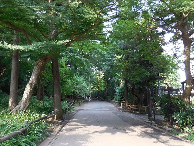 井の頭公園の緑道