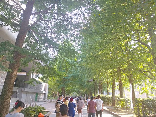 上野公園の新緑
