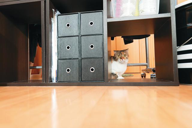 Wiz Box 01の各部屋には豊富な収納が設けられている。おかげで棚のスペースに余裕が生まれ、猫が自由に通り抜けできる