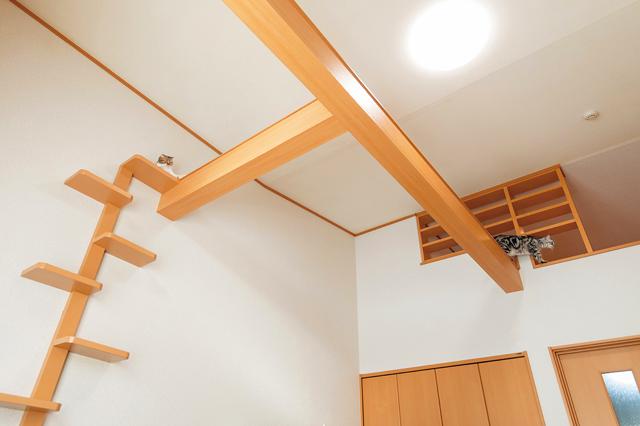 Wiz Box 01の一室。備え付けのキャットタワーとキャットウォーク