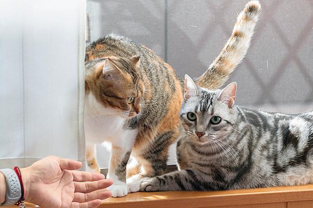 ペット共生マンション「Wiz Box 01」でのびのびと暮らす2匹の猫