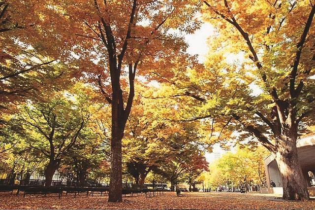大通公園は官公庁街に近いことから作中にも度々登場する