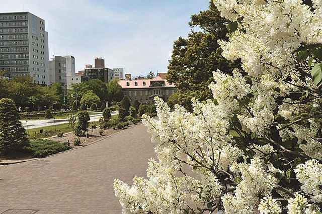 大通公園。札幌市街を東西に走る「大通」の車線中央を公園とした憩いのスペースだ