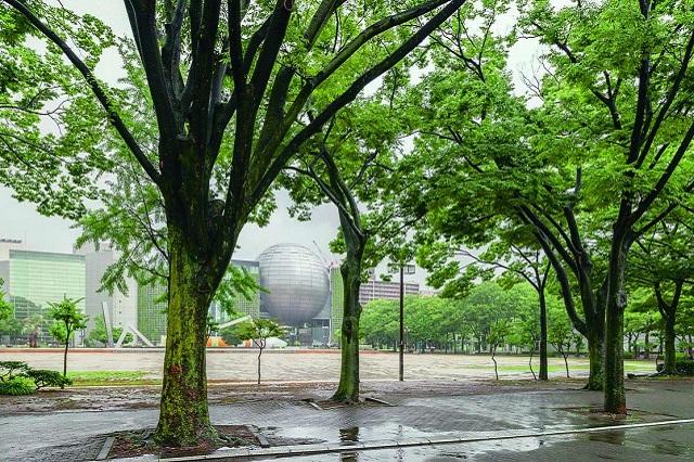 白川公園。100m道路の一つ、若宮大通沿いにある都市公園