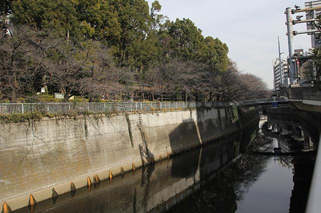 続いて、神田川沿いを歩き、目白方面へと歩く|下関マグロさんと歩く早稲田