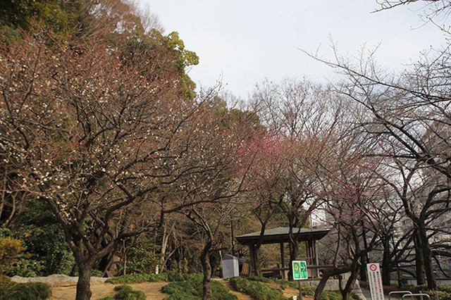 川沿いに整備された公園。取材時には梅が開花していた|下関マグロさんと歩く早稲田
