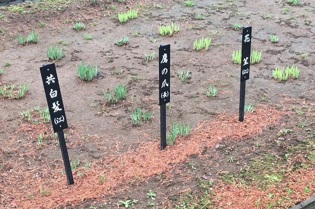 しょうぶ沼公園に植えられた菖蒲の数なんと140品種、約8100株。「鷹の爪」って唐辛子じゃなかったっけ?|東京メトロ直通運転開始で便利になる街「北綾瀬」「方南町」をサキドリ取材してきた