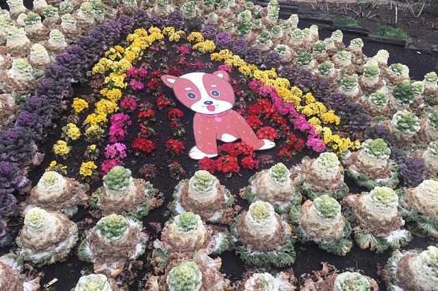 その近くには、かわいらしいフラワーガーデンも。花を愛する心のゆとりを持った住人が多いのだろう|しょうぶ沼公園|東京メトロ直通運転開始で便利になる街「北綾瀬」「方南町」をサキドリ取材してきた