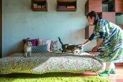 【猫との暮らし】2DKに総勢7匹。猫に囲まれた賃貸暮らしの苦労と喜びを取材してみた