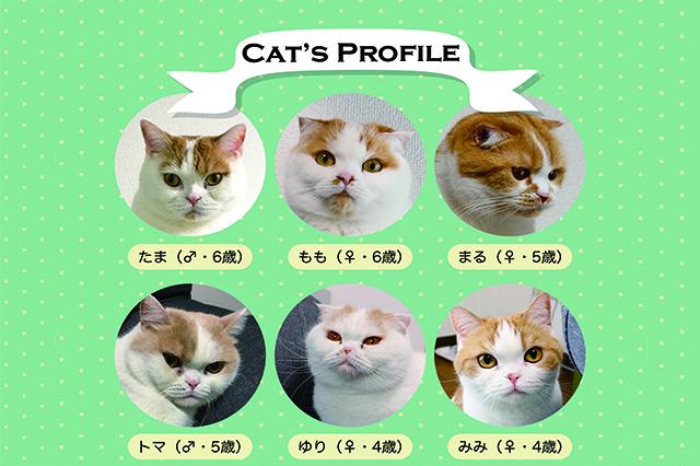 ひらま家の猫たち|【猫と暮らす】賃貸でスコティッシュフォールド6匹! 狭くても猫アレルギーでも快適