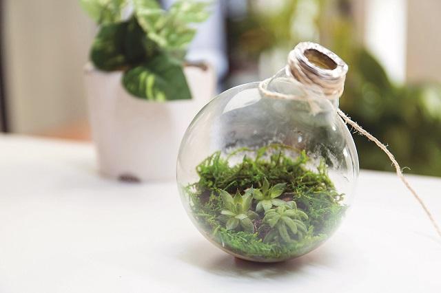 オシャレにグリーンを取り入れよう!|100均グッズで簡単&オシャレな電球テラリウムの作り方