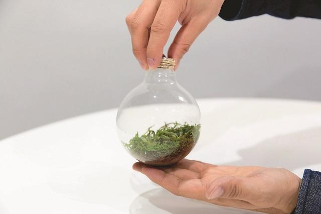 飾ったグリーンが動かないよう、そっと運ぼう|100均グッズで簡単&オシャレな電球テラリウムの作り方
