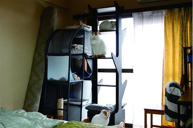 部屋では猫たちが思い思いの場所でゆっくりくつろいでいた|【猫と暮らす】賃貸でスコティッシュフォールド6匹! 狭くても猫アレルギーでも快適