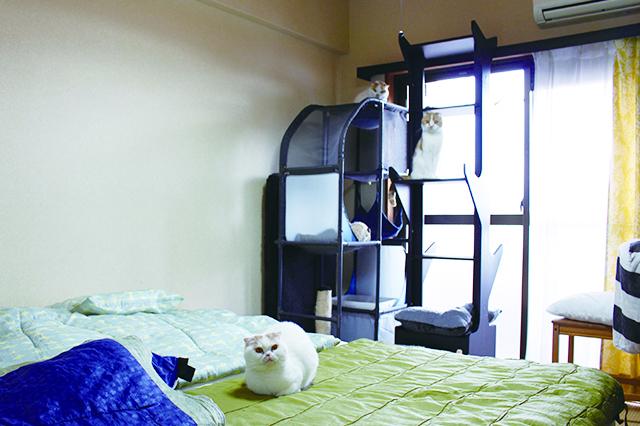 シングルベッドを2台つけて広々と。猫たちを遊ばせても階下に響かないので安心|【猫と暮らす】賃貸でスコティッシュフォールド6匹! 狭くても猫アレルギーでも快適