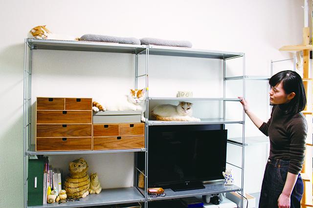 スチールユニットの棚を段違いにして立体移動を可能に|【猫と暮らす】賃貸でスコティッシュフォールド6匹! 狭くても猫アレルギーでも快適