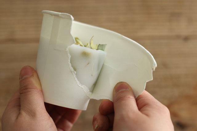 紙コップをむけば、ボタニカルキャンドルの完成!|【賃貸DIY】お部屋のインテリアに!100均グッズでボタニカルキャンドルを作ろう