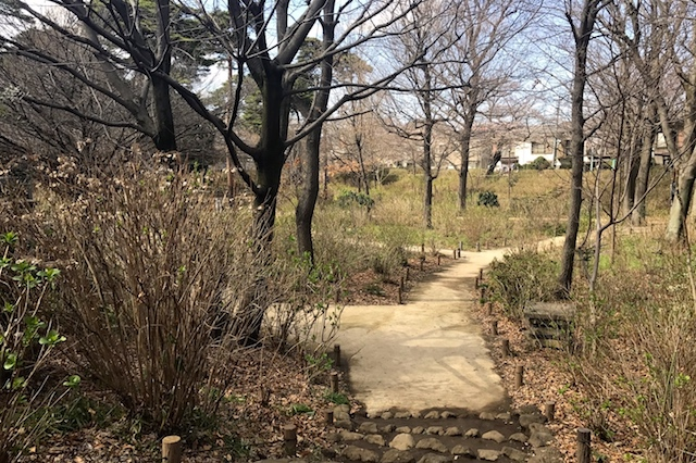 3月下旬の「あじさい公園」。予想どおりの枯れ景色。見頃を迎える6月には約1,500株の美しいアジサイが園内を埋め尽くしていることだろう 〝日本一大きい丸ポスト〟のある街・小平はノスタルジック&SNS映えする風景の宝庫だった