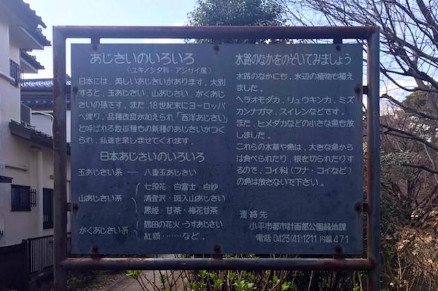 水路にはヒメダカなども棲息しているようだ 〝日本一大きい丸ポスト〟のある街・小平はノスタルジック&SNS映えする風景の宝庫だった