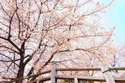 """日本最初の公園""""飛鳥山公園がある街・王子を新旧グルメに胸キュンしながら歩いてみた"""