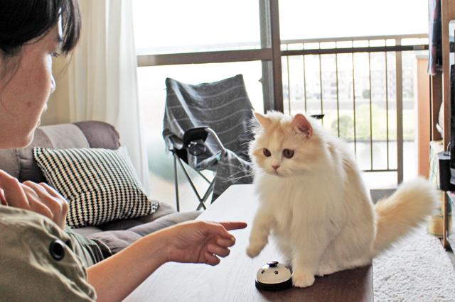 猫の京介と母ちゃんこと水野さんのコミカルな日常はインスタで見られる|【猫との暮らし】人気ねこ・京介の飼い主に聞く!賃貸物件の選び方や長毛種の猫と暮らす工夫