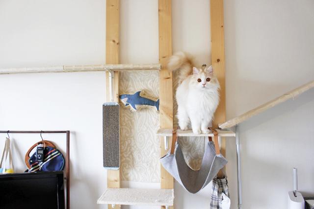 ラガマフィンは8kgにもなる大型の猫だが、京介は4.5kgとやや小さめ|【猫との暮らし】人気ねこ・京介の飼い主に聞く!賃貸物件の選び方や長毛種の猫と暮らす工夫