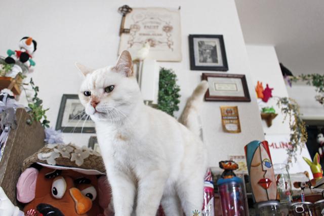 猫がいれば家にいる時間が長くなる。「インテリアも楽しむようになった」と遠藤さん|【猫との暮らし】中野のワンルームで愛猫と暮らす女性に、ペット可物件を探すコツを聞いた