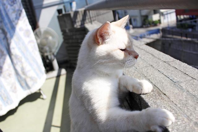 「はっさくはいつも渋い顔なんです」とはいえ、広いベランダには大満足!|【猫との暮らし】中野のワンルームで愛猫と暮らす女性に、ペット可物件を探すコツを聞いた