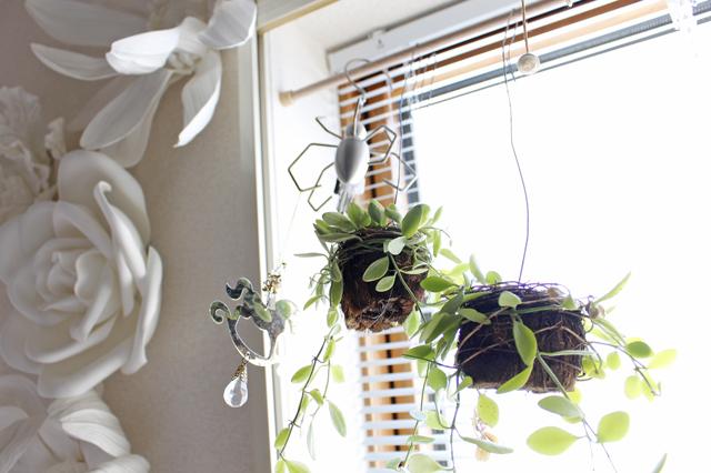 猫がいたずらしないように、窓につっぱり棒を渡してハンギングタイプの観葉植物を飾っている|【猫との暮らし】中野のワンルームで愛猫と暮らす女性に、ペット可物件を探すコツを聞いた