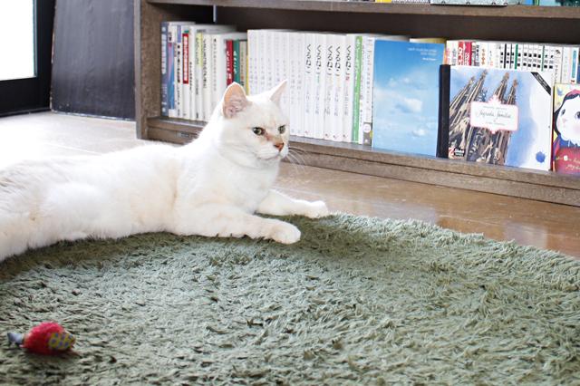 「ニャーニャー」とよく鳴くはっさく。「青森「青森県十和田市出身だからきっと南部弁(笑)」と遠藤さん|【猫との暮らし】中野のワンルームで愛猫と暮らす女性に、ペット可物件を探すコツを聞いた