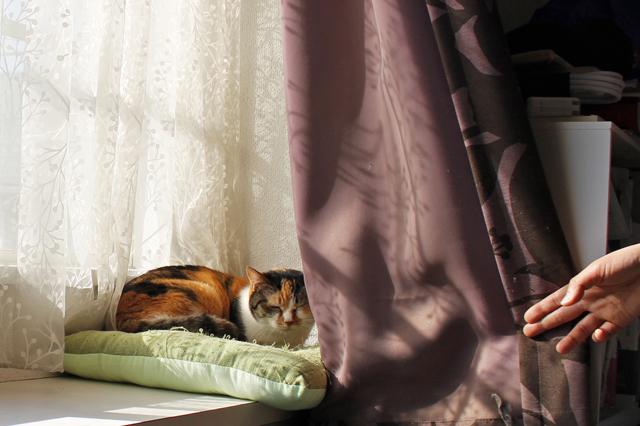 日当たりのよい窓辺がミミのお気に入りスペース。日差しに三毛が映える。おやすみ中に失礼!|【猫との暮らし】都心から練馬のメゾネット賃貸へ引っ越し。猫が吐かなくなった理由とは?