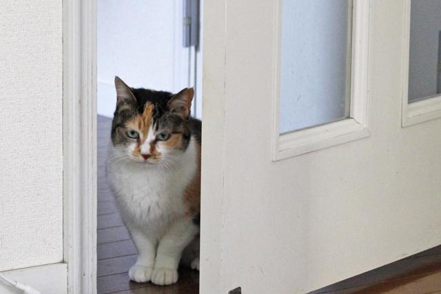 猫が閉じ込められないよう、夫婦でドアの開閉には注意している|【猫との暮らし】都心から練馬のメゾネット賃貸へ引っ越し。猫が吐かなくなった理由とは?