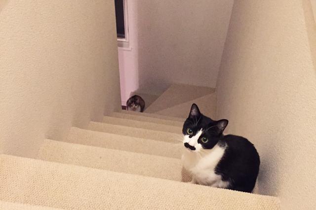 階段を行き来して運動する猫たち。カーペット敷きなので駆け下りても滑らない|【猫との暮らし】都心から練馬のメゾネット賃貸へ引っ越し。猫が吐かなくなった理由とは?