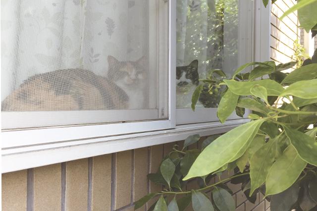 少し都心から離れたら、庭付きメゾネット賃貸などの掘り出し物件もあるかも。家族と猫に合った条件で部屋を探そう|【猫との暮らし】都心から練馬のメゾネット賃貸へ引っ越し。猫が吐かなくなった理由とは?