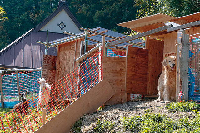 祖父江さんファミリーが暮らす古民家賃貸物件の広いお庭。山羊と犬がのびのび暮らす