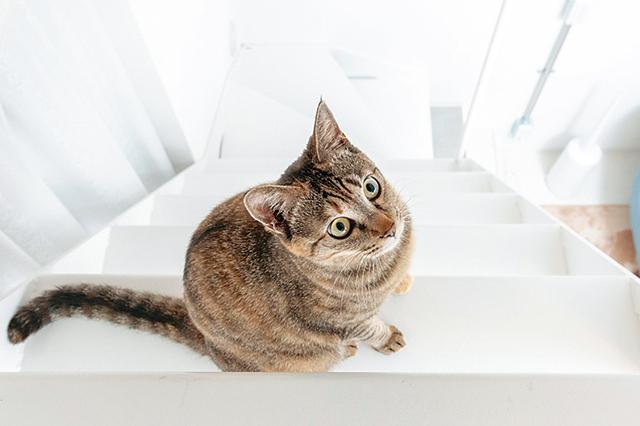 猫共生賃貸の階段で遊ぶりんちゃん