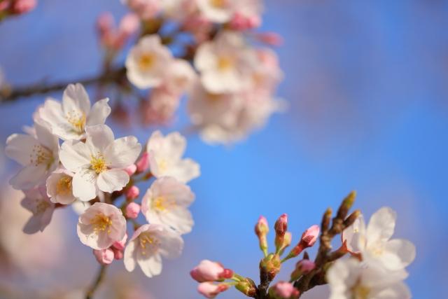 桜のつぼみが膨らむ時期には、不動産会社は繁忙期!