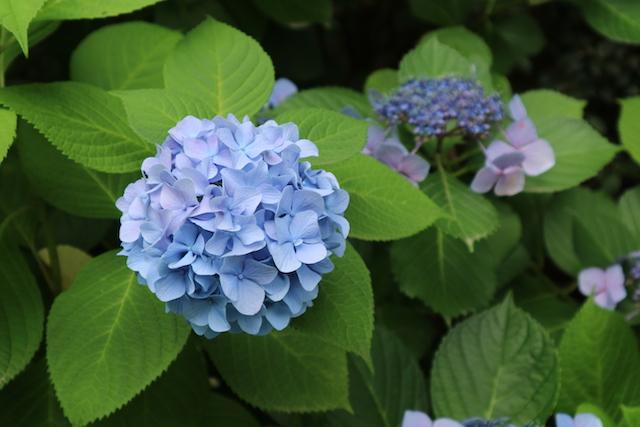 素人の写真:公園の花