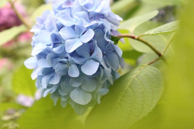 カメラマンの写真:公園の花