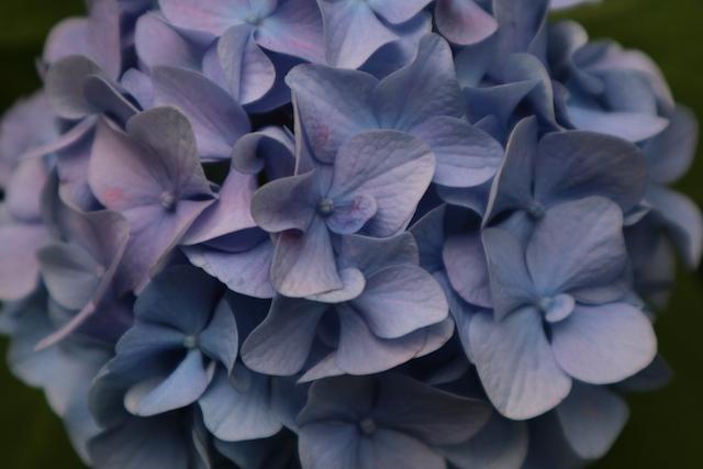 カメラマンの写真:公園の花のアップ