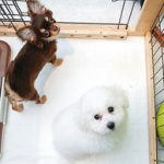 ペットショップ店員が伝授!賃貸物件で飼うのにおすすめな室内犬6選