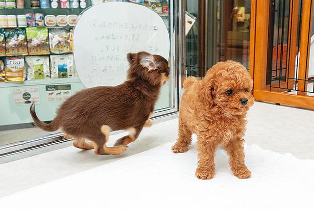 毛 の 抜け にくい 犬 種