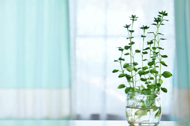お部屋のテーブルに置いてある植物