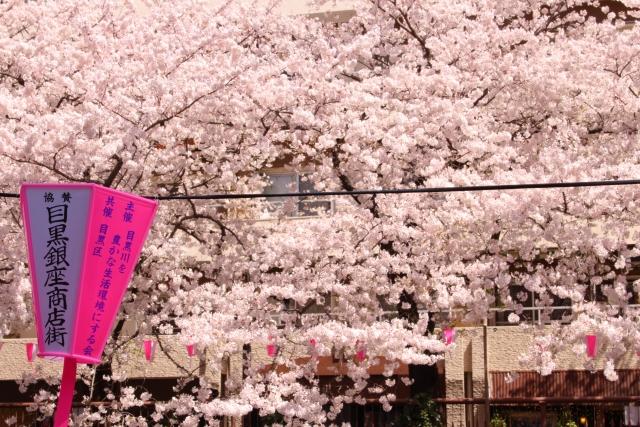 春には見事な花を咲かせる目黒川の桜並木も徒歩圏内