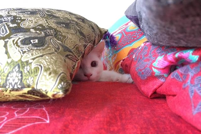 クッションの中に隠れている猫