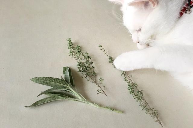 草木を触る白猫